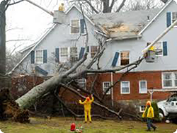 Wind Damage Remediation